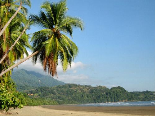 Costa Rican Coconuts