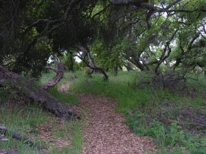oaks04