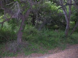 oaks05