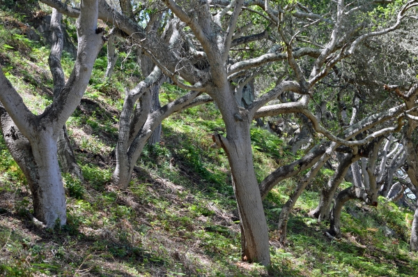 gnarledtrees